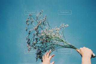 見上げた空飛ぶ花の写真・画像素材[1376587]