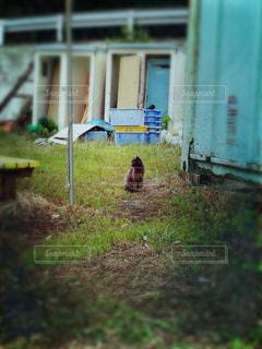 島猫の写真・画像素材[1278598]