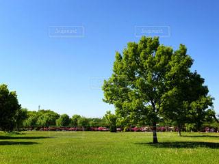 背景の木と大規模なグリーン フィールドの写真・画像素材[1157619]