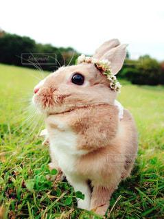 クローズ アップ フィールドに小動物のの写真・画像素材[1197361]