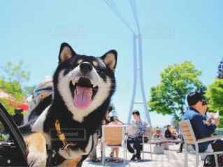 テーブルの上に座っている犬 - No.1213926