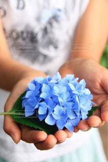 紫陽花と小さな手の写真・画像素材[1227421]
