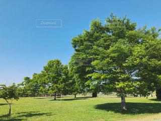 緑豊かな公園の写真・画像素材[1250990]