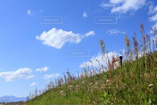 見晴らしの良い丘の写真・画像素材[1251196]