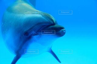 イルカに話しかけられるの巻の写真・画像素材[1312529]