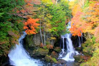 滝の写真・画像素材[1643278]