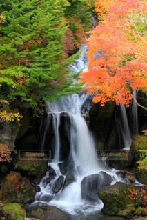 滝の写真・画像素材[1643423]
