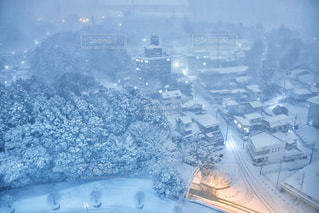 風景,木,雪,白,樹木,灯り,ホワイト,栃木県,雪化粧,大雪,宇都宮市,白い世界