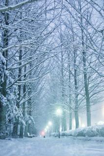 風景,木,雪,白,枝,美しい,樹木,歩道,ホワイト,栃木県,雪化粧,大雪,銀杏並木,宇都宮市,白い世界,雪の木