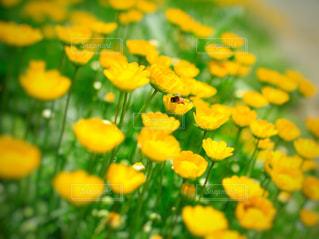 幸せの黄色フォトコンテストの写真・画像素材[1837768]