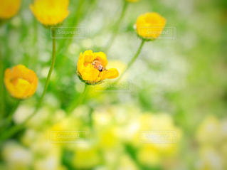 花,花畑,屋外,かわいい,黄色い花,小さい,ビタミンカラー,幸せ,flower,イエロー,ミツバチ,ハチ,黄色い,yellow,カワイイ,みつばち,花粉
