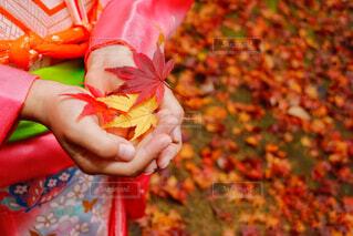 自然,公園,秋,紅葉,屋外,かわいい,カラフル,季節,女子,鮮やか,子供,女の子,手持ち,人物,外,着物,人,小さい,こども,ポートレート,七五三,思い出,色,成長,ライフスタイル,手元,大切,キレイ,小さな手
