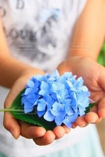 自然,公園,花,屋外,かわいい,あじさい,手,季節,女子,子供,女の子,手持ち,紫陽花,人物,外,人,こども,ポートレート,思い出,成長,ライフスタイル,手元,大切,キレイ