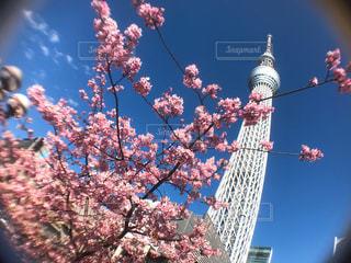 東京スカイツリーの写真・画像素材[1032205]