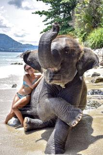 象と一緒に写真の写真・画像素材[1217800]