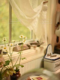 可憐な小花をキッチンで楽しむの写真・画像素材[1032399]