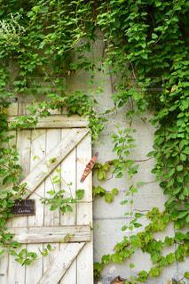庭の植物の写真・画像素材[1037320]
