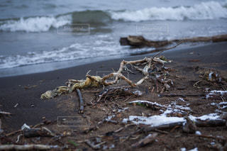 砂浜の上に座っている鳥の写真・画像素材[1204115]