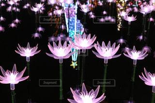 花,イルミネーション,栃木県,足利フラワーパーク,足利市