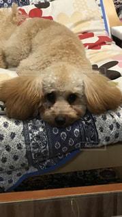 近くに犬のアップの写真・画像素材[1190608]