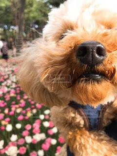 近くに犬のアップの写真・画像素材[1199985]