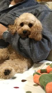 座っている犬の写真・画像素材[1199990]