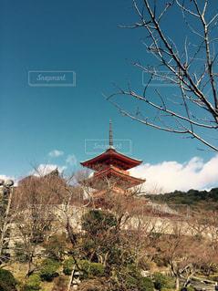 開花前の桜の写真・画像素材[1033308]