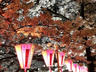 春,桜,夜桜,目黒川,3月