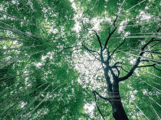 自然の写真・画像素材[469130]
