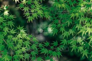 自然の写真・画像素材[469137]