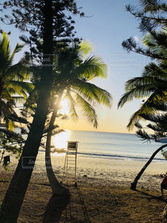 ヤシの木とビーチの写真・画像素材[1034200]