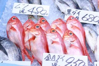 近くに魚のアップ - No.1083465