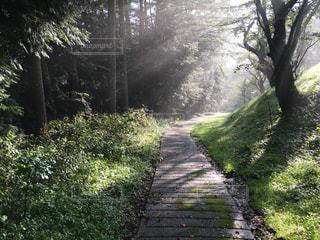 旧中山道 諏訪の森の道の写真・画像素材[1040106]