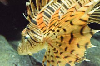魚の写真・画像素材[1282702]