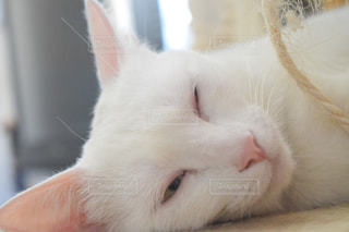 夏バテ猫の写真・画像素材[1349368]