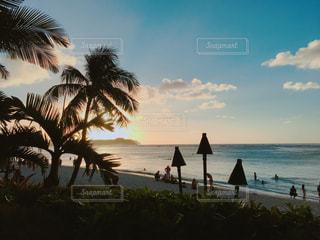 ヤシの木とビーチの人々の写真・画像素材[1035296]