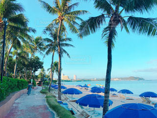 ヤシの木とビーチの写真・画像素材[1035811]