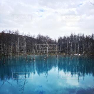 青い池の写真・画像素材[1035526]