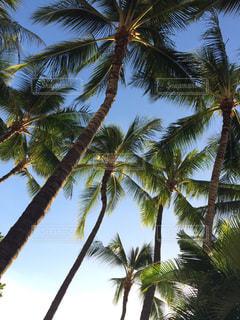 ヤシの木とビーチの写真・画像素材[1035398]