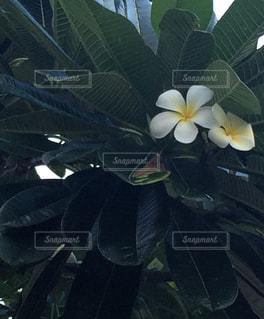 近くの花のアップの写真・画像素材[1035994]