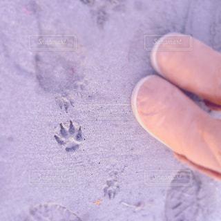 犬の散歩の写真・画像素材[1036434]