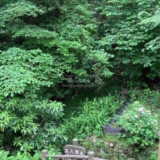 屋外,樹木,草木,針葉樹,ガーデン