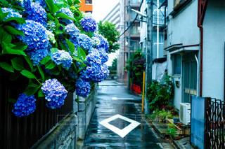 雨,傘,青,紫陽花,道,梅雨