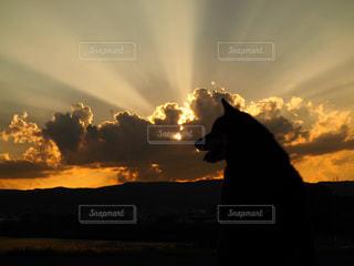 犬,空,秋,夕日,雲,夕焼け,夕暮れ,シルエット,柴犬