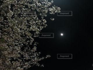 月と桜の写真・画像素材[1229367]