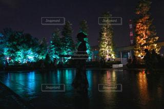 暗闇の中の木と水体の写真・画像素材[1381185]