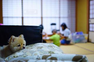 ベッドの上に座っている犬の写真・画像素材[1225248]