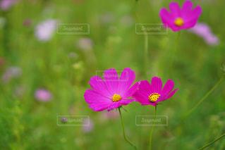 近くの花のアップの写真・画像素材[1503450]