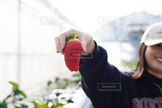 食べ物,緑,赤,いちご,苺,フルーツ,いちご狩り