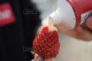 食べ物,緑,赤,いちご,苺,フルーツ,いちご狩り,練乳,フレッシュいちご